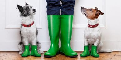 dog walking, dogs in wellington boots waiting to be walked by the dog walker