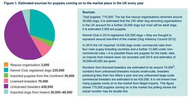 here are some interesting facts and figures from the rspca which helped me decide to take this new route
