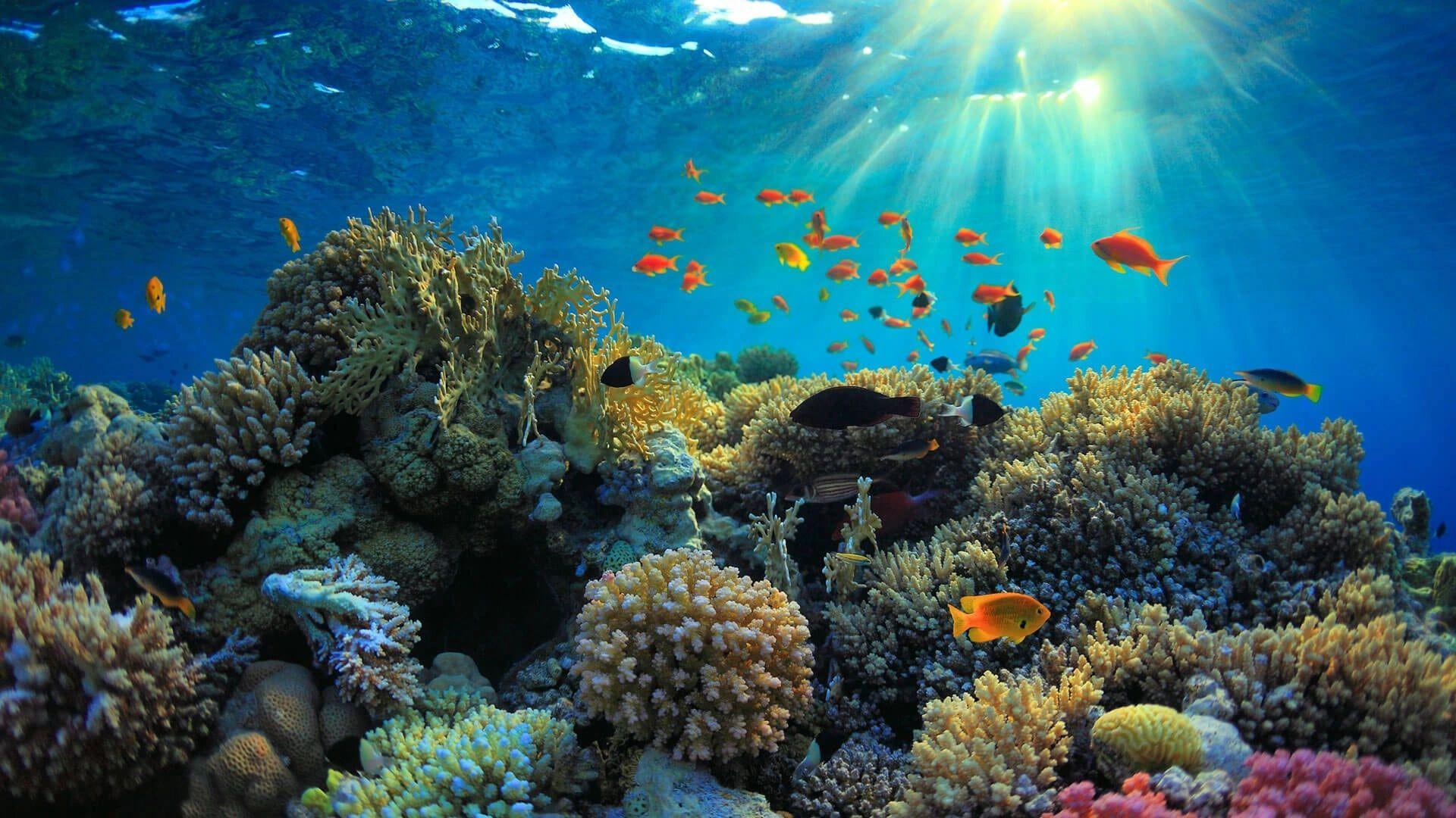 Seascape Aquarium Aquarium Supplies Pet Store Pet Supplies