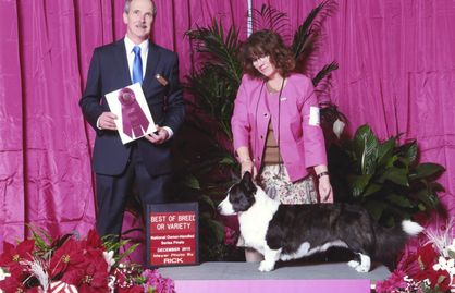 GCHB Blu Skyy's Stir It Up CGCA, TDA, RN, PT won 2015 Owner Handler, National Dog Show in Orlando.