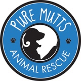 Pure Mutts Animal Rescue