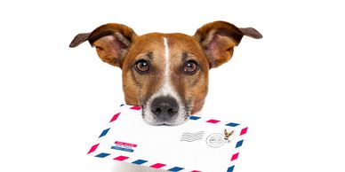 Pet Health Certificates - Country Companion Animal Hospital, Veterinarian in Morgantown, PA