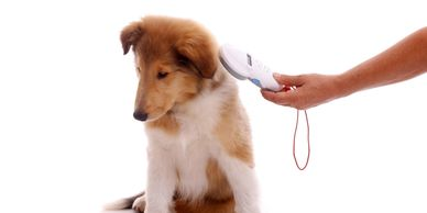 Pet MIcrochips - Country Companion Animal Hospital, Veterinarian in Morgantown, PA