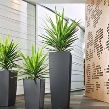 Tall grey planters Corporate planters