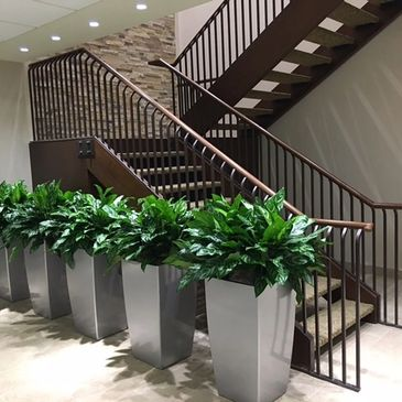 Indoor plants Office plants Aglaonemas Silver planters Tall planters