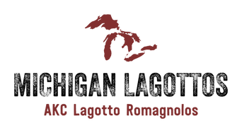 Michigan Lagottos