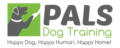 Dog training, puppy training, in home positive dog training. Obedience training.