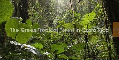 Green-tropical-forest