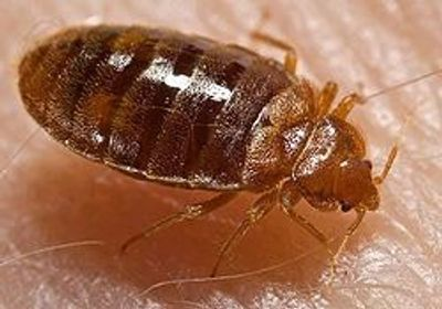 Bed Bug Exterminating for NYC and Long Island!