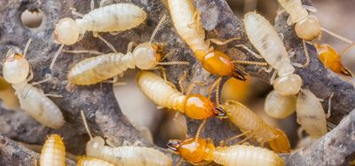 Termite Exterminating for NYC & Long Island!