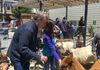 Supervisor Jeff Sheehy at the SummerFEST petting zoo, June 2017