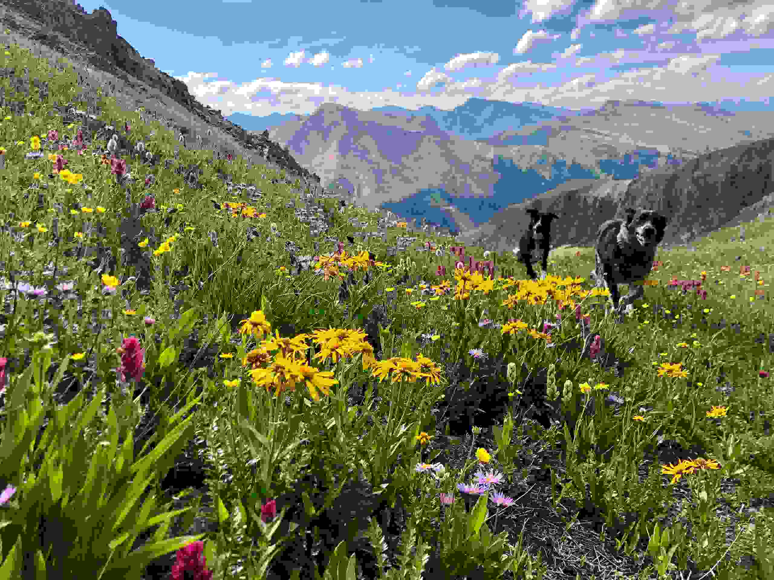 Alpine wildflower hikes above red mountain pass.