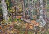 "PETER HENDRICK 2015 ""Forest Interior, Long Pond, Grand Manan, NB""  Oil on board (diptych)  20"" x 32""  Framed  $ 1,400"