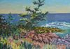 "PETER HENDRICK 2015 ""Pine Tree, Southern head Beach, Grand Manan, NB""  Oil on board  16"" x 20""  Framed $800"