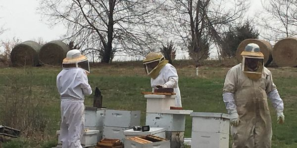 Left to Right - Michelle Duprey, Karlon Stephen & Walt Stephen working some Honeybees!