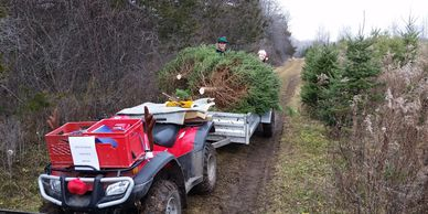Transporting the Christmas tree to the car
