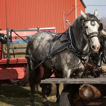 Horse-drawn wagon rides on holidays