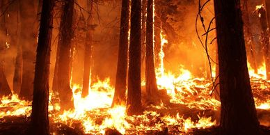 Disaster Relief for wildfires, providing shelter food and water donate!  Charity 501 c3