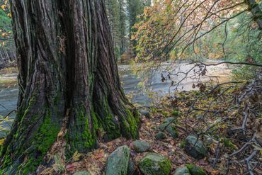 Merced River. Yosemite National Park. Autumn. Water, Trees,