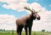 "Moose Jaw - Moose (Mac), Largest – south side of Hwy 1 east of the city at Visitor Centre GPS: 50°24'42.7""N 105°30'35.6""W"