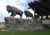 "White Cap First Nations - Bison Family - in front of Dakota Dunes Casino GPS: 51°53'23.9""N 106°42'18.1""W"