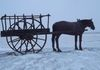 "Dundurn - Horse & Cart – town entrance on west side of Hwy 11 GPS: 51°48'32.4""N 106°29'47.8""W"