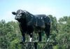 "Grunthal – Bull Cow - 2.8 west of Town on Hwy GPS: 49°23'59.5""N 96°48'39.0""W"