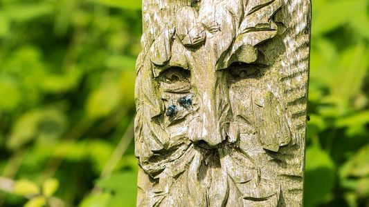 A wooden carving of a green man character with two flies on his nose.  There are trees behind