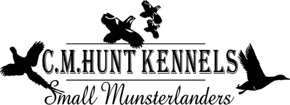 C.M. Hunt Kennels Small Munsterlanders