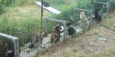 The foundation awarded the farm $950 for the project of a summer shelter for its cats.