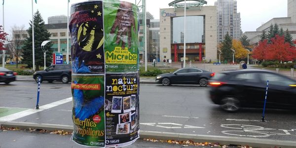 Event postering on poster collars in Ottawa and Gatineau