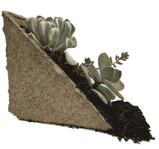 CowPots packaging corners can also serve as a growing medium, with planted succulents.