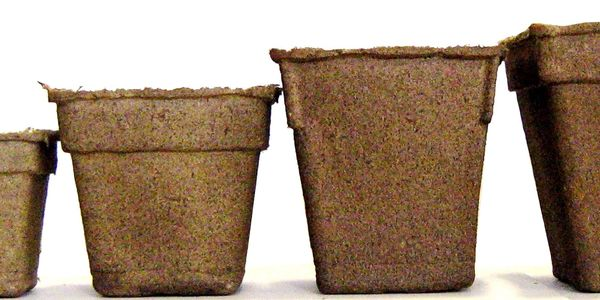 Range of CowPots biodegradable pot sizes, 3 inches to 5 inches square.