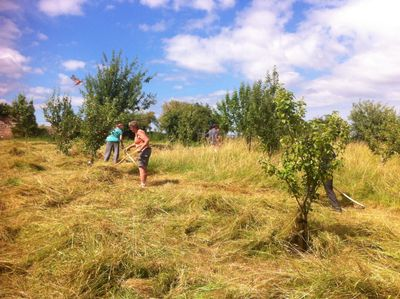 Volunteer scythers in the Community Orchard at Swains Lane Nature Reserve.