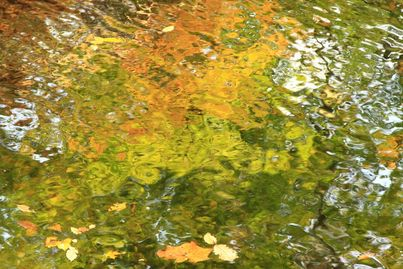 Timp Brook Abstract