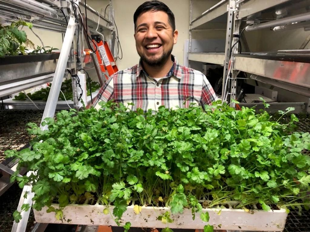Cultivo Cilantro Agricultura Vertical Vertical Agriculture Sustainable Agriculture Huerto Urbano MTY