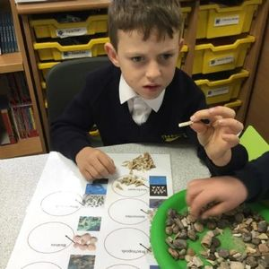 Fossil workshop for primary schools KS2 KS1