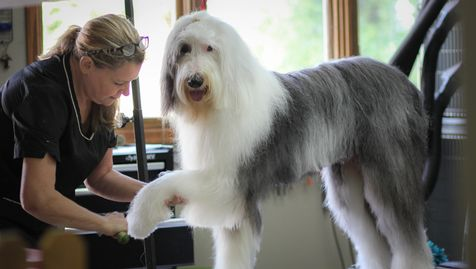 The golden green paw pet grooming self washing solutioingenieria Gallery