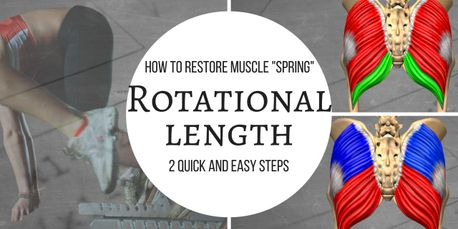 posterior chain rotational length muscle spring