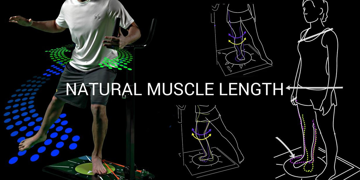 muscle force length