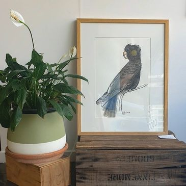 framed black cockatoo ink painting by Grace McClymont