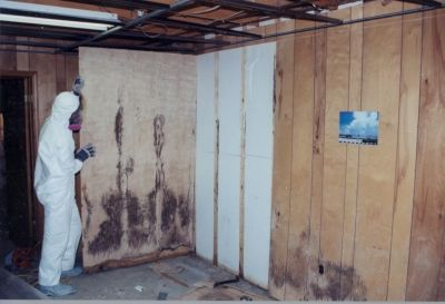 Mold behind paneling in a basement
