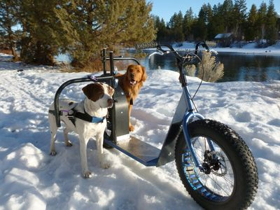 Products/Prices/Sales | DogPoweredScooter