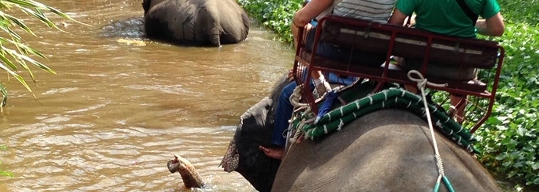 Riding on elephants in stream.