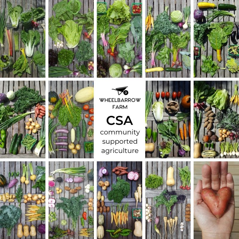 Toronto CSA, CSA basket, community supported agriculture, vegetable baskets toronto