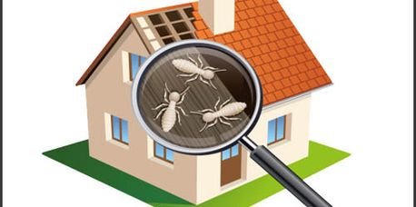 Johnson county/ Kansas city termite service. Inspect, treat and maintain your home with Canyon Creek