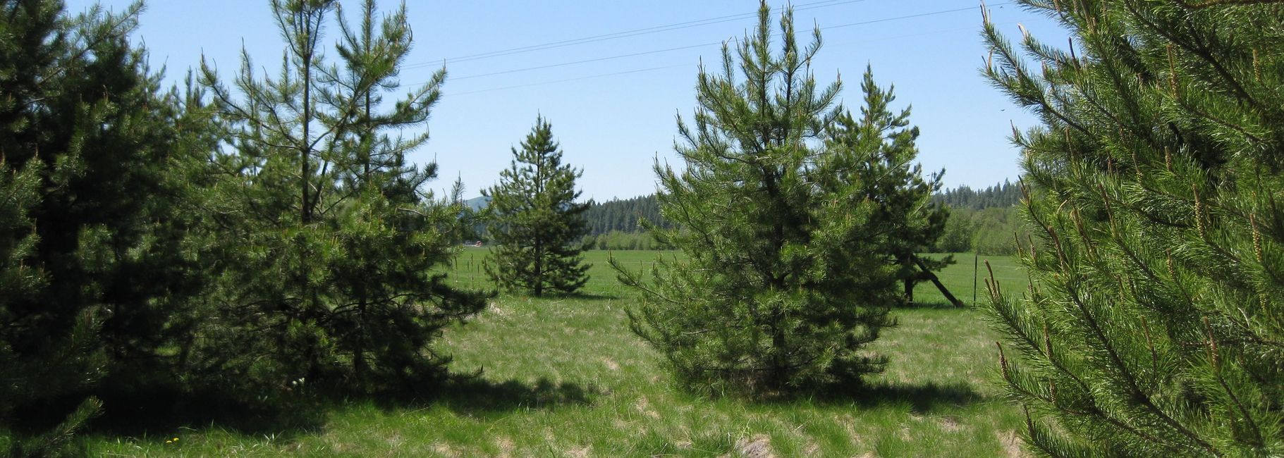 Land for sale in washington state. Treed land for sale. Meadow land for sale.