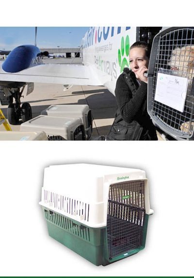 Woman Loading Dog in Kennel on Airplane