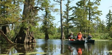 Canoeing the Cache River cypress swamp.