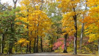 Southern Illinois fall trails